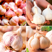 Garlic Bulbs - Lovers' Collection