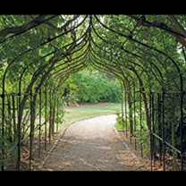 The essence of a Victorian walkway, complete with finials rising skywards. The classic range of steel tubing is suitable for flowering climbers and pe