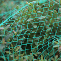 Bird Netting to Protect your crops