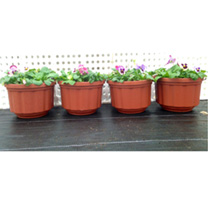 Patio Container Deal