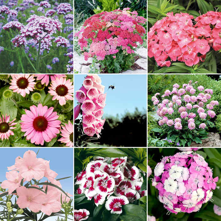 Pink Collection Plants