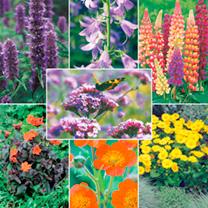 Perennial Plants & Crates