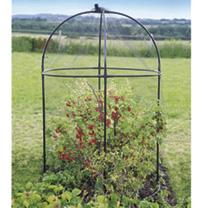Steel Round Fruit Cage & FREE Blackcurrant Plant
