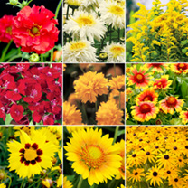 Yellow Collection Plants