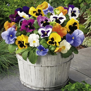 View our Bedding Mix
