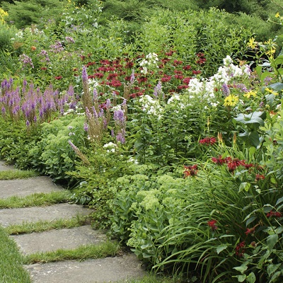 Save 50% on Cottage Garden Perennials