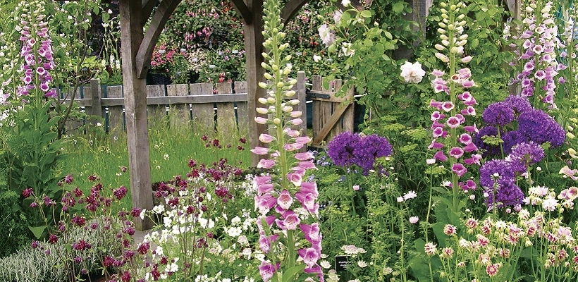 Cottage Garden Perennial Lucky Dip