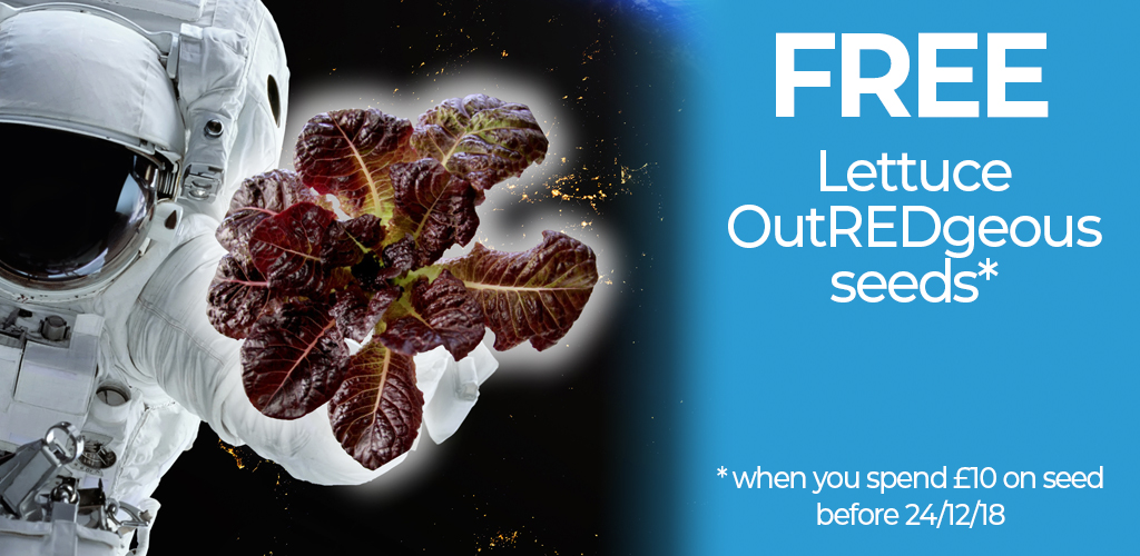Free Lettuce OutREDgeous Seeds