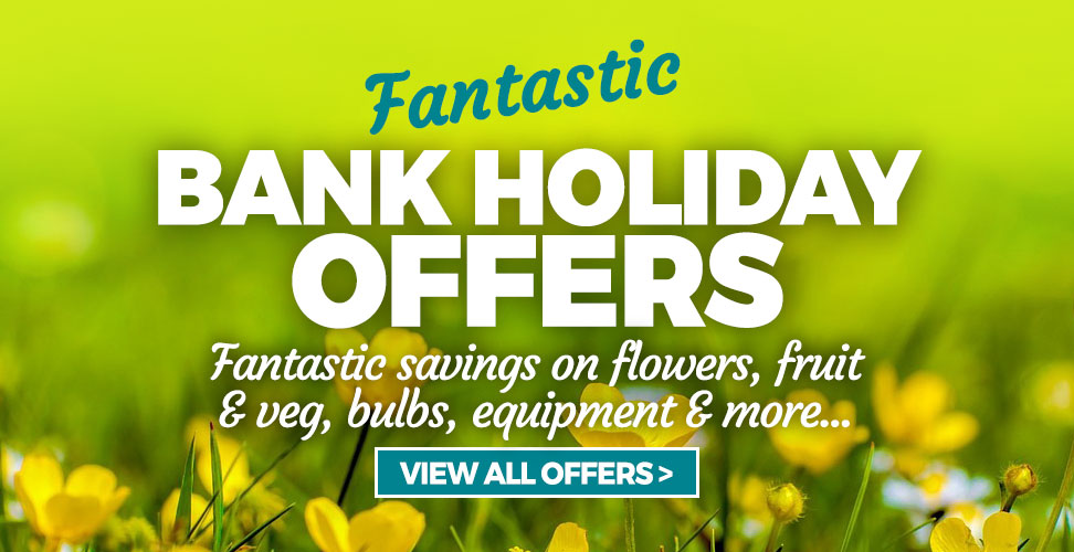 August Bank Holiday Offers