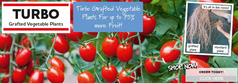 Buy Grafted veg