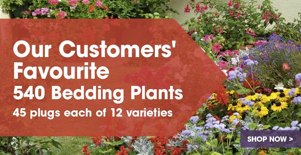 View our customers favourite Bedding Plants