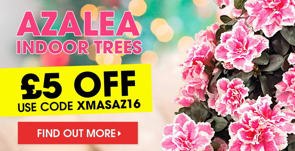 view our range of azaleas