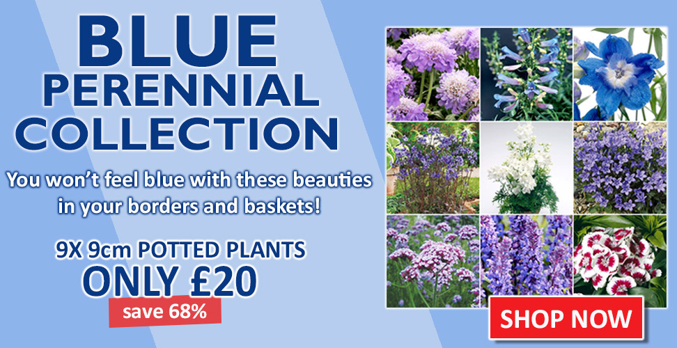 View our Amazing Perennial Collections