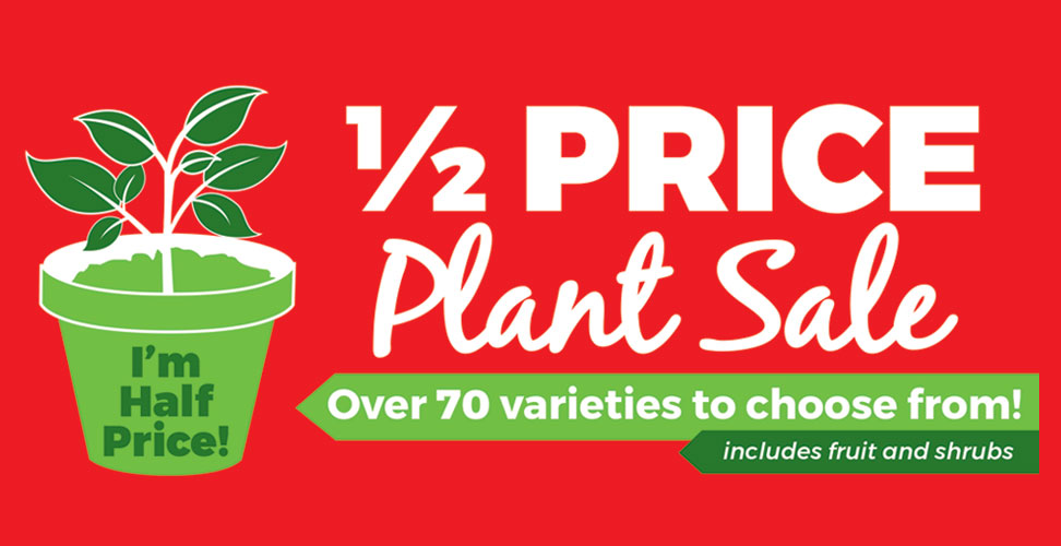 Half price plants sale