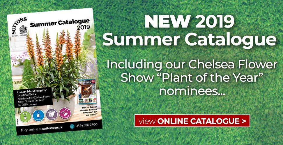 Summer Catalogue 2019