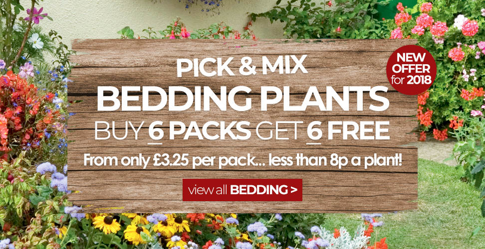 suttons pick and mix bedding plants