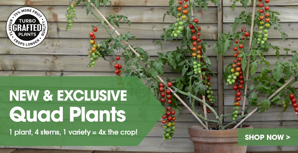 View our new & exclusive Quad Plants