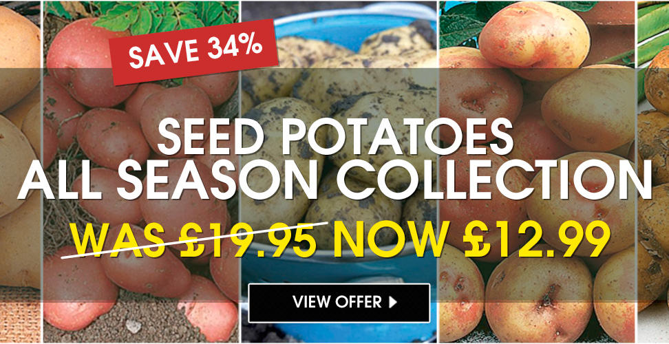 All Season Collection - Seeds Potatoes
