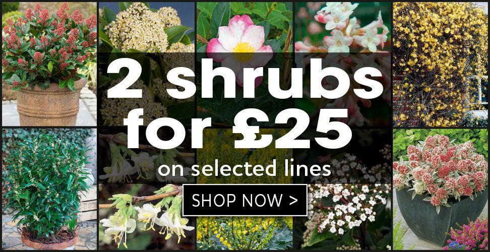 2 shrubs for £25