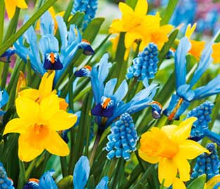 View Our Exclusive Bulb Mixes