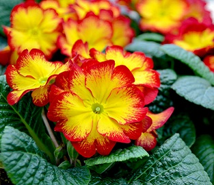 View our Autumn Bedding Plants