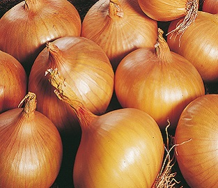 View our Autumn Planting Onions