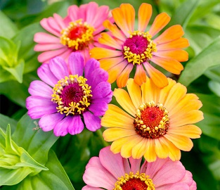 View our amazing range of Bedding Plants