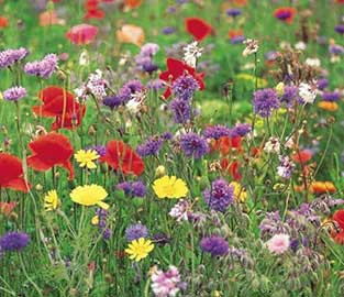 Flower Seeds to Sow in December
