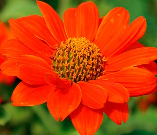 Flower Seeds to sow in February