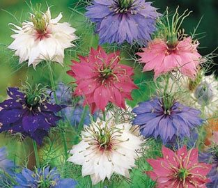 Flower Seeds to sow in June