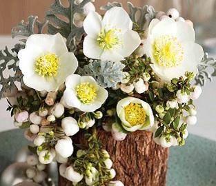 View our range of Indoor Plants