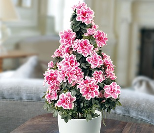 View our range of Indoor Plants