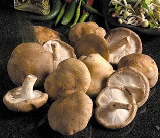 View our Mushroom Windowsill Kits