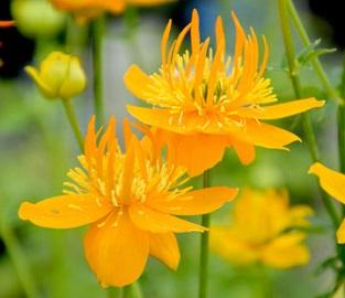 View our amazing selection of Perennial plants