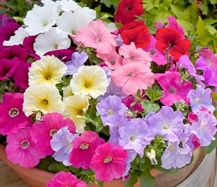 View our Pick and Mix Value Plug Plants