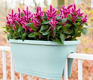 View our great selection of beautiful Planters