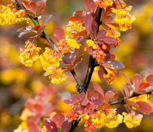 View our stunning range of trees and Shrubs