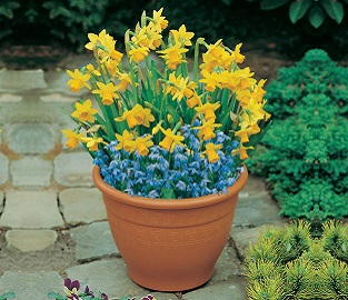 View our range of Pre Planted Bulbs