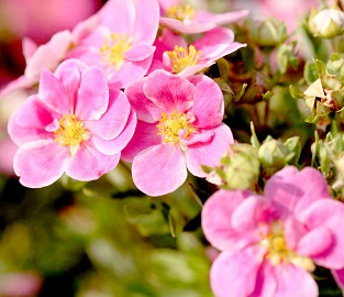 View our range of Pick & Mix Shrubs
