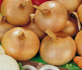 View our Spring Planting Onions
