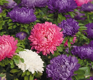 View our Summer Bedding Plants