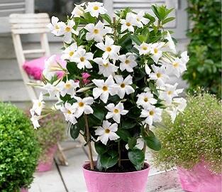 2 Litre Plants