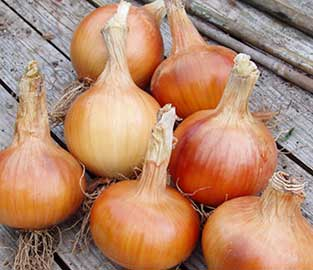 Veg Seeds to Sow in December