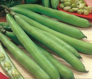 Veg Seeds to sow in October