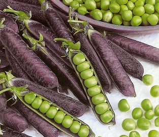 View our amazing range of Vegetable Plants
