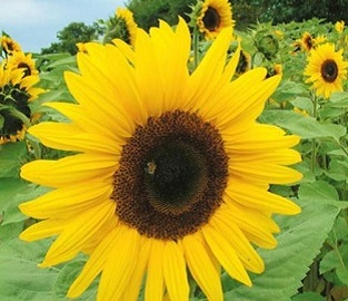 Flower Seeds to sow in April