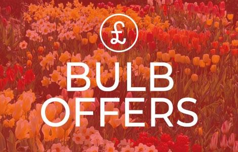 Bulb Offers