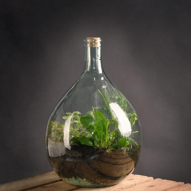 View Our Amazing Terrarium
