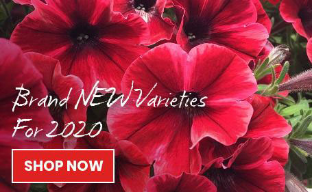 New varieties for 2020