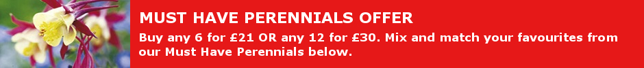 Must have perennial offer - any 6 for 21 or any 12 for 30